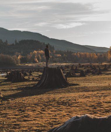 Un homme sur une souche d'arbre géante